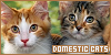 Cats: Domestic: