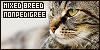 Cats: Non Pedigree/Mixed Breed: