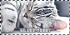 Silver Tabby: