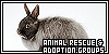 Animal Rescue & Adoption Groups:
