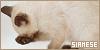 Cats: Siamese: